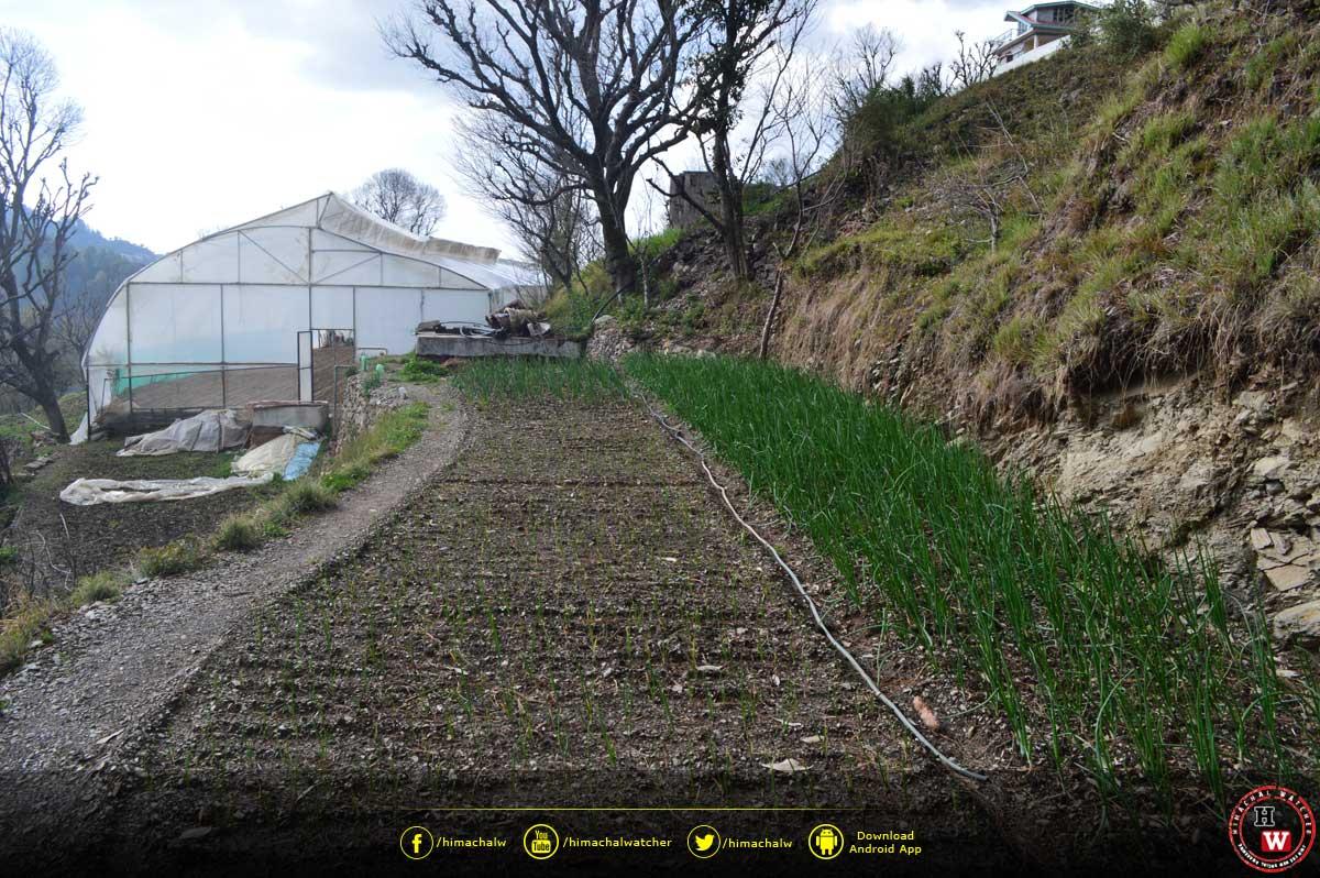 solar-fencing-save-crops