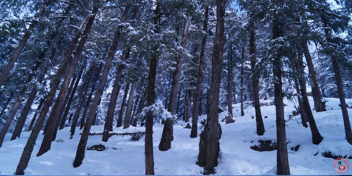 jakhu-forest