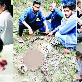 una-leopard-attack-in-himachla
