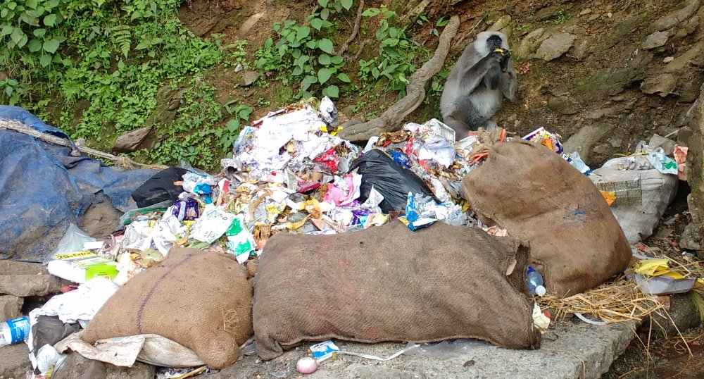 Monkey attracted by littering in shimla