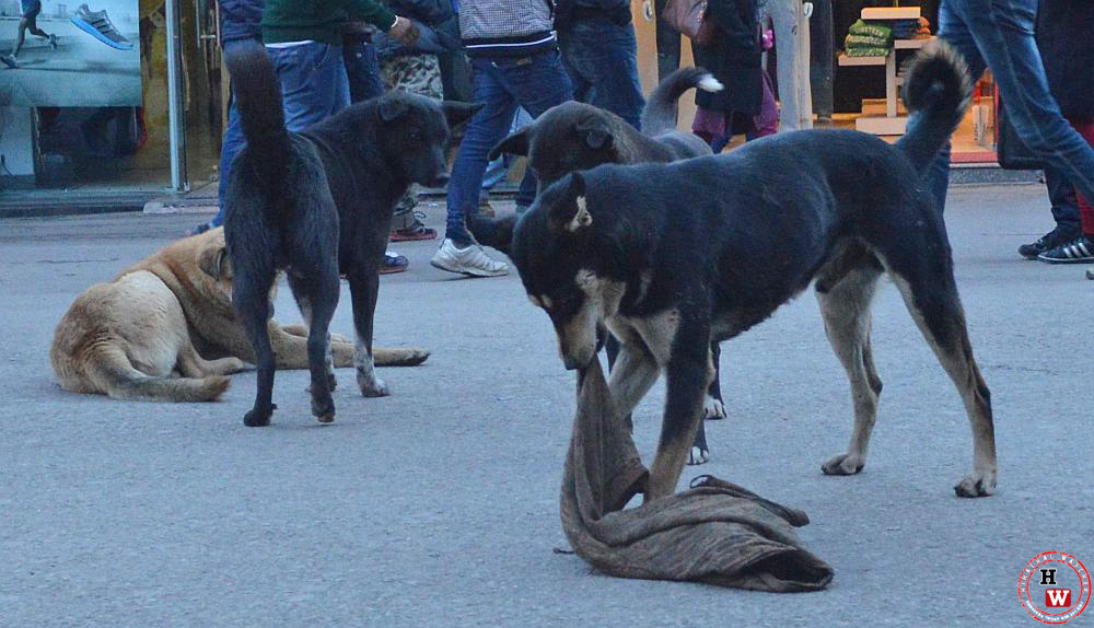 stray dogs maul a kid to death in Hiamchal pradesh