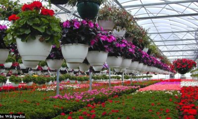 protected flower cultivation in himachal pradesh
