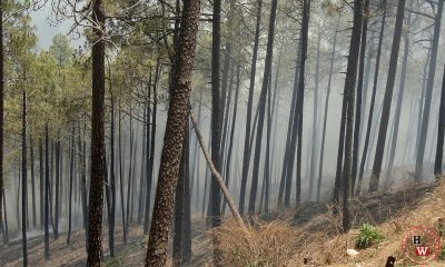 Forest fire kills forest officer in Himachal pradesh