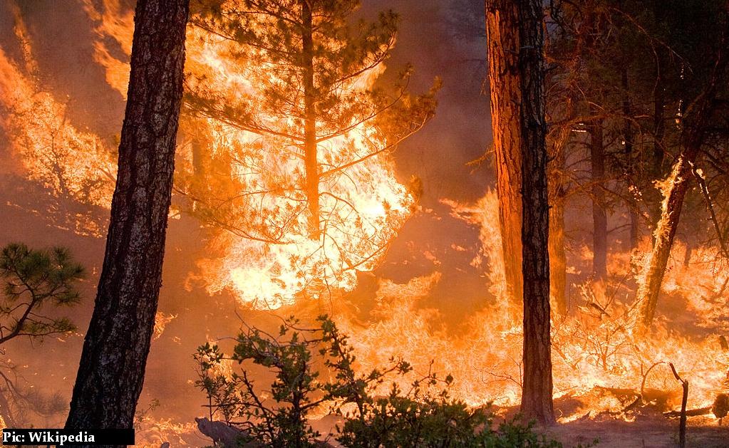 Forest fires in himachal pradesh