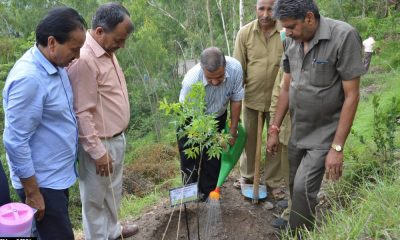15 lakh sapling planted in Himachal Pradesh on van mahotsav