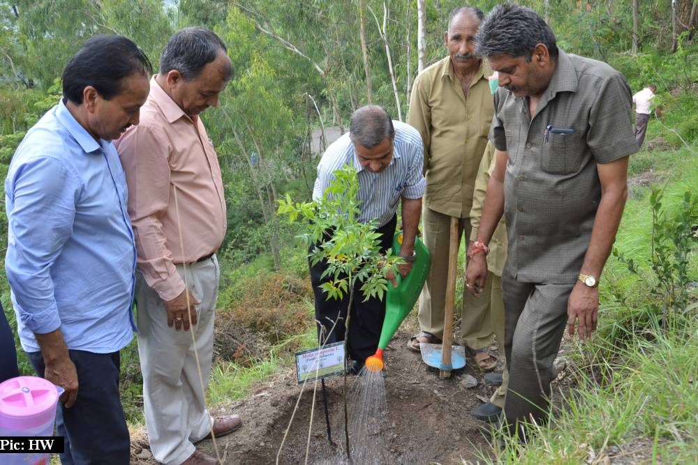 15 lakh sapling planted in Himachal Pradesh on van mahotsav