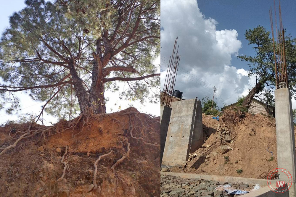 Ilegal tree felling in Dharamshala town 4