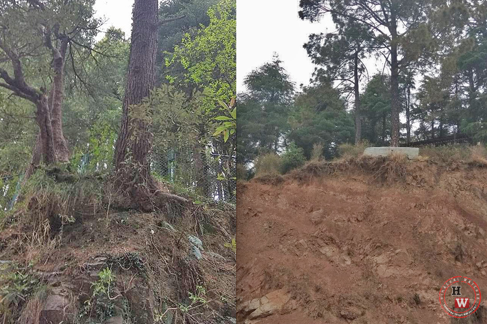 Ilegal tree felling in Dharamshala town 6