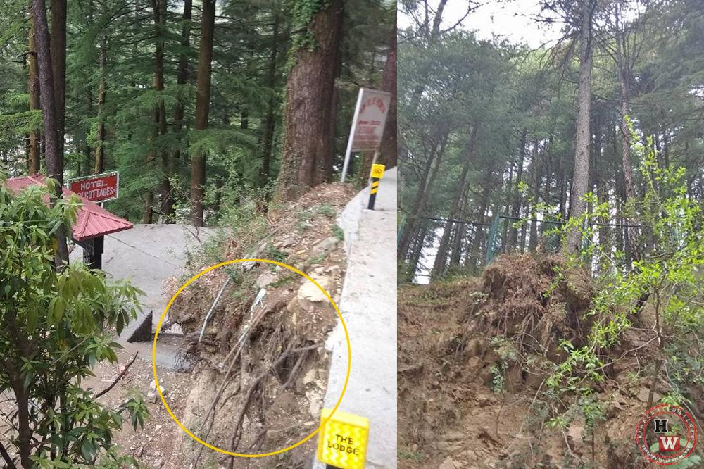 Illegal tree felling in dharamshala