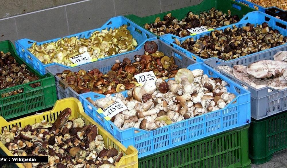 Mushroom cultivation in himachal pradesh