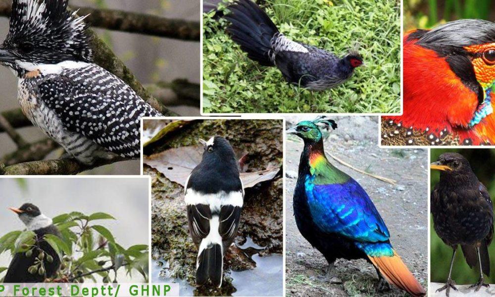 Bird Species Count in Himachal Pradesh