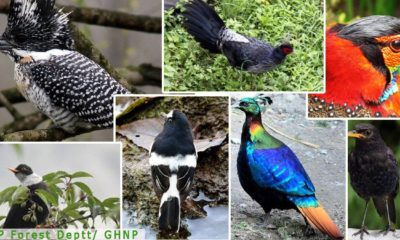 Bird Species Count in Himachal Pradesh