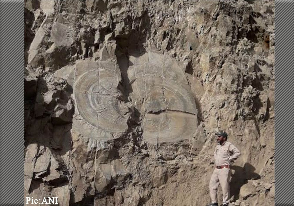 Tree Fossil Found in Shimla's Kharapathar