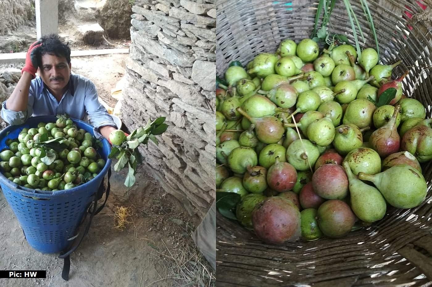 Farmers in Himachal Pradesh Demand Compensation
