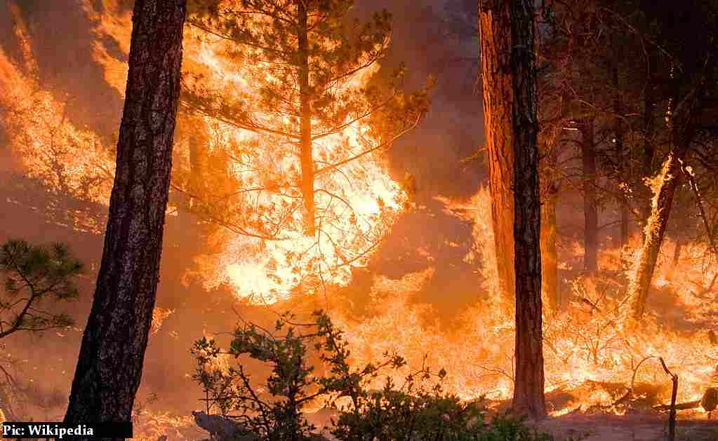 NGT Guidelines for controlling Forest-fires-in-himachal-pradesh