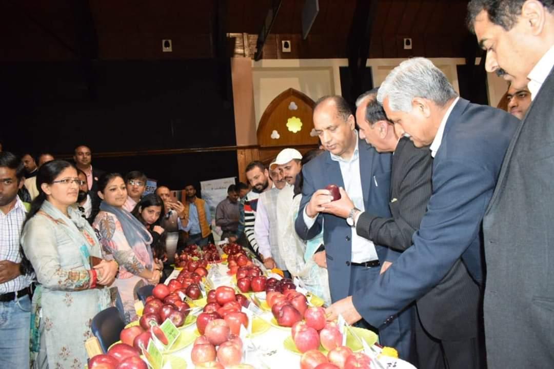 Biggest Apple Cake at himachal apple festival