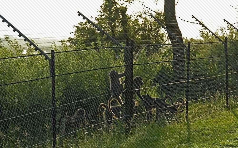 Farmers in Himachal Pradesh get subsidy on fencing