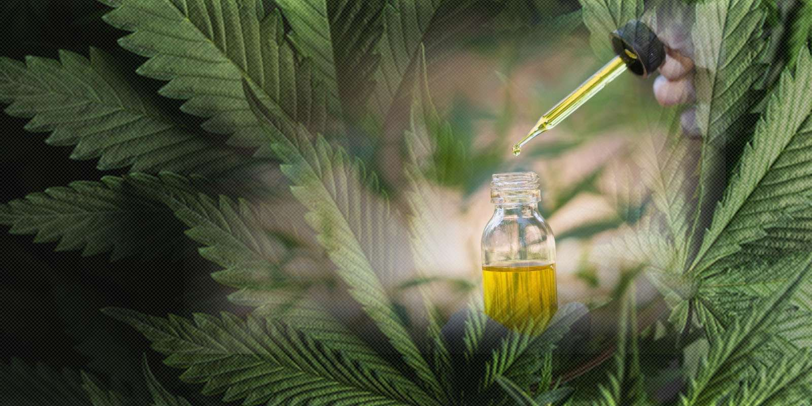 Cannabis Legalizatoin in Himachal Pradesh 2019