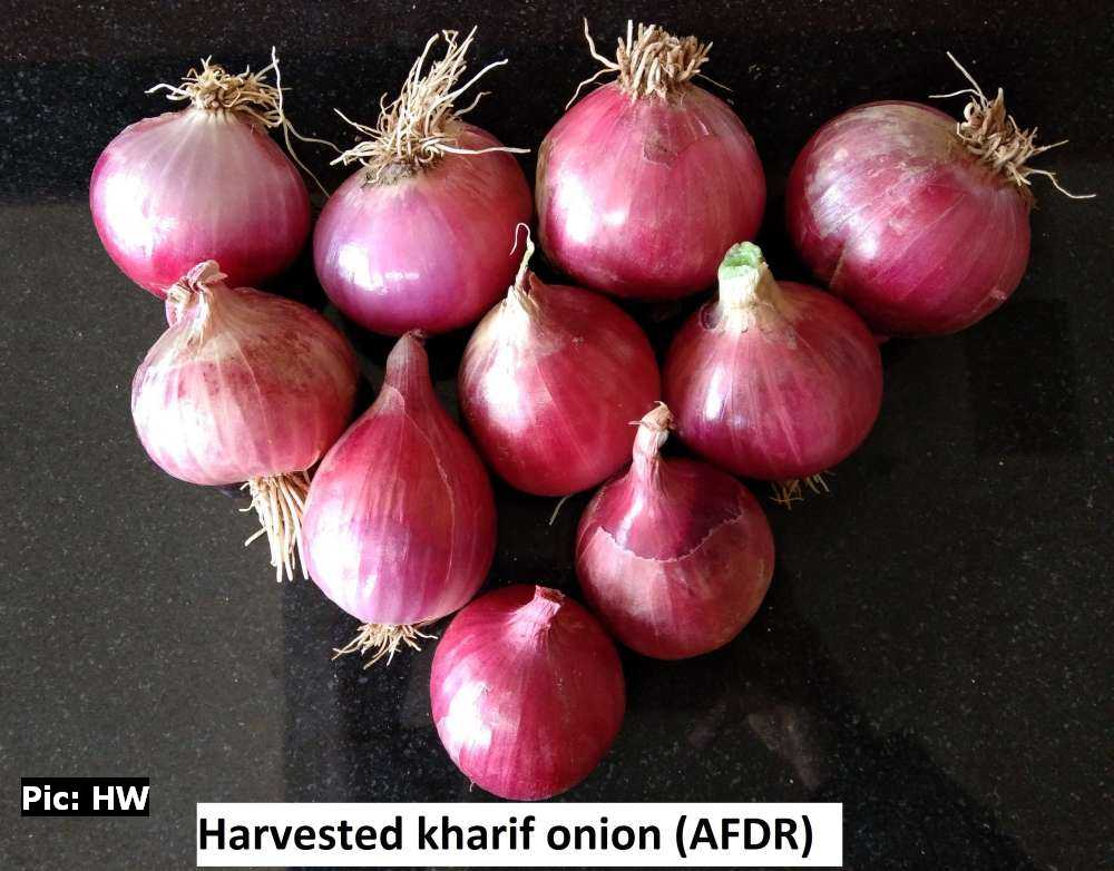 Kharif Onion Research by uhf scientist