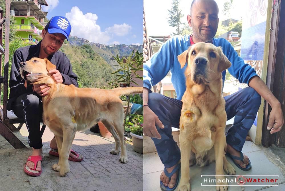 Shimla Dog Jackie survives leopard attack