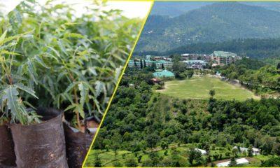 nauni university Fruti Plant sale