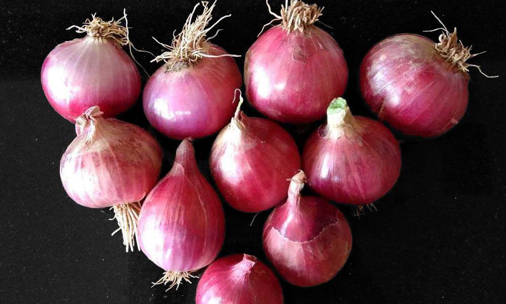 HP Govt Onion Sale in Himachal PRadesh