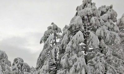 snowfall in himachal pradesh in 2020