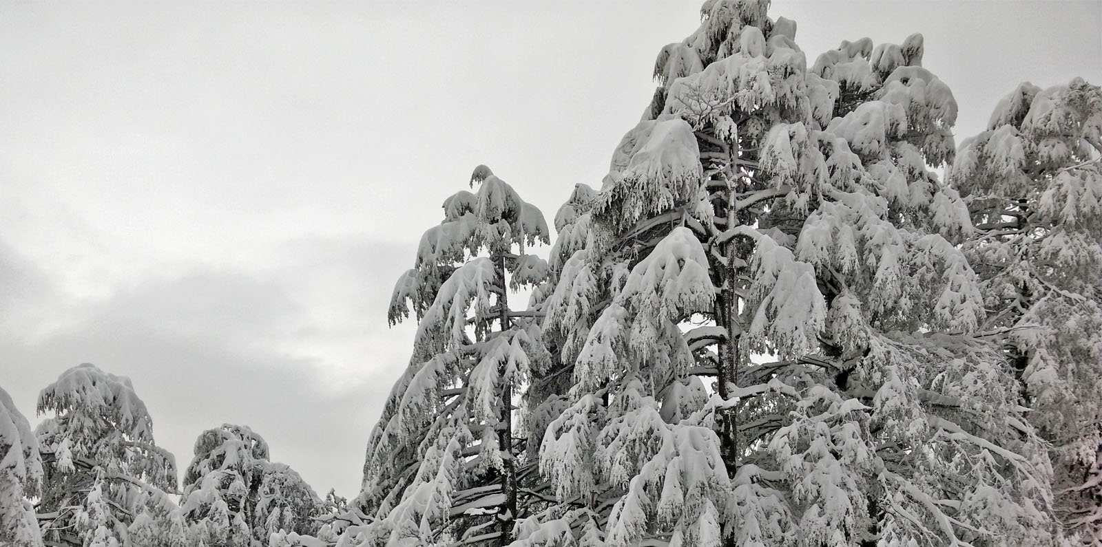 snowfall in himachal pradesh in 2020
