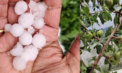 Bad weather damages crops in himachla pradesh