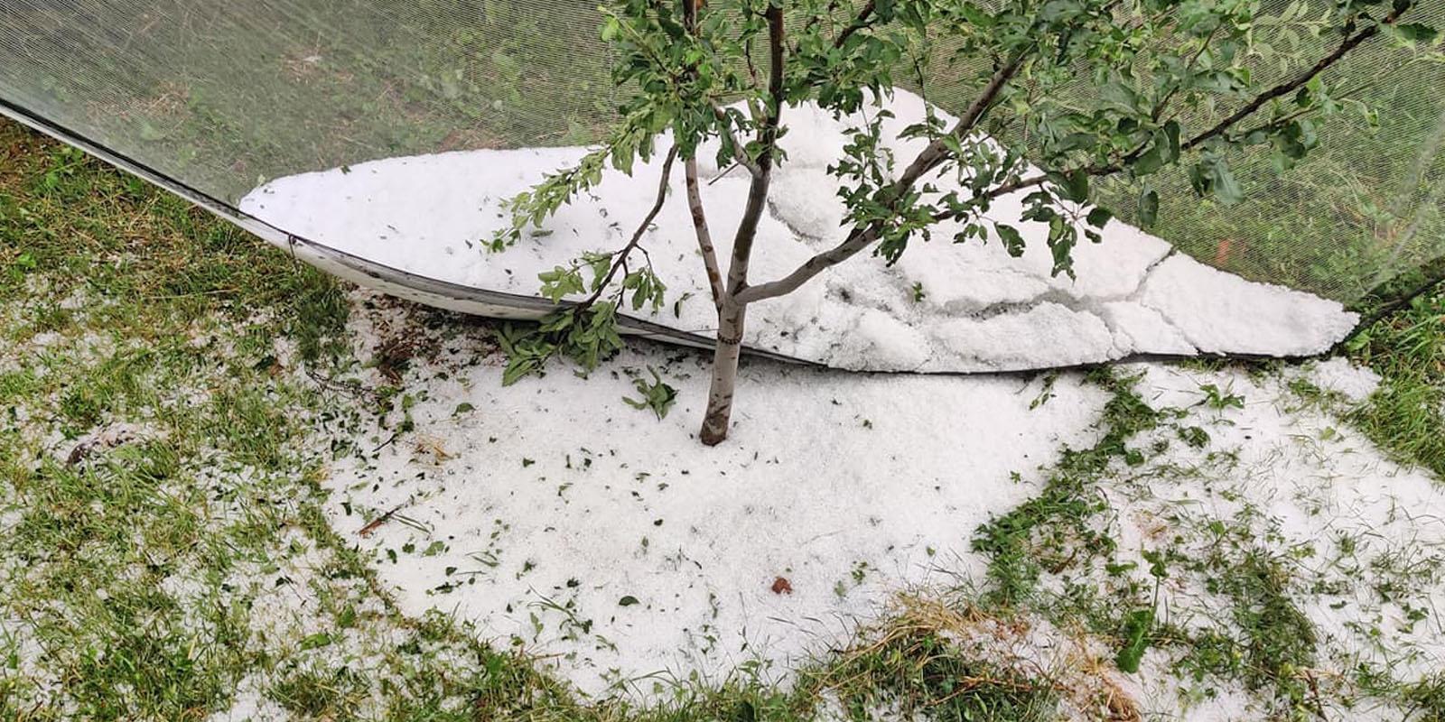 hailstorm damages apple crop