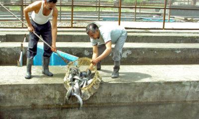 Himachal pradesh fish export 2020