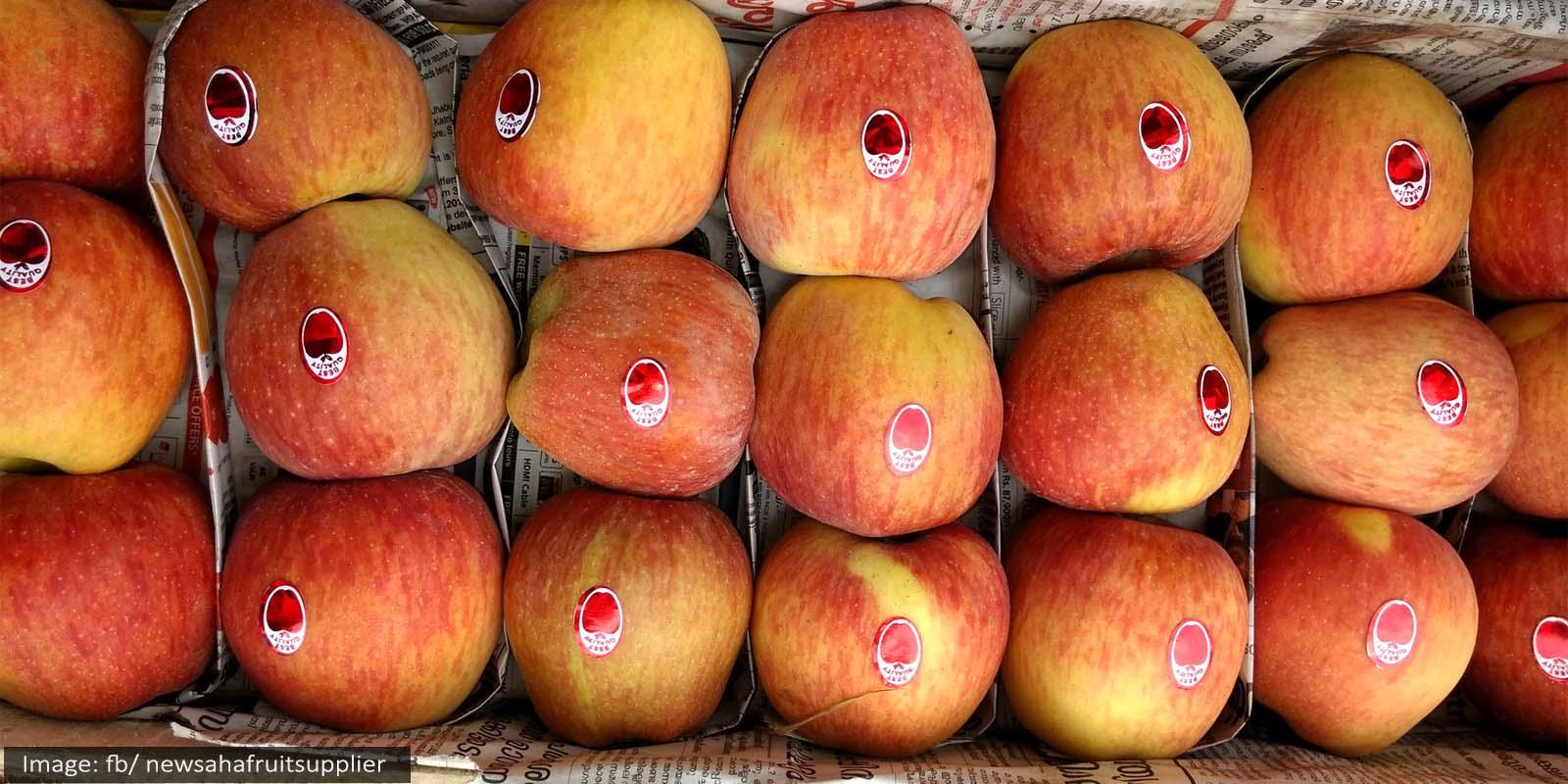 Shimla Apple Season Labour shortage