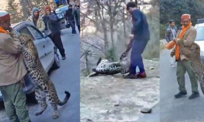 Viral Himachal Leopard Cub Video