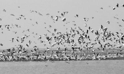 Annual Bird Count in Himachal Pradesh 2021