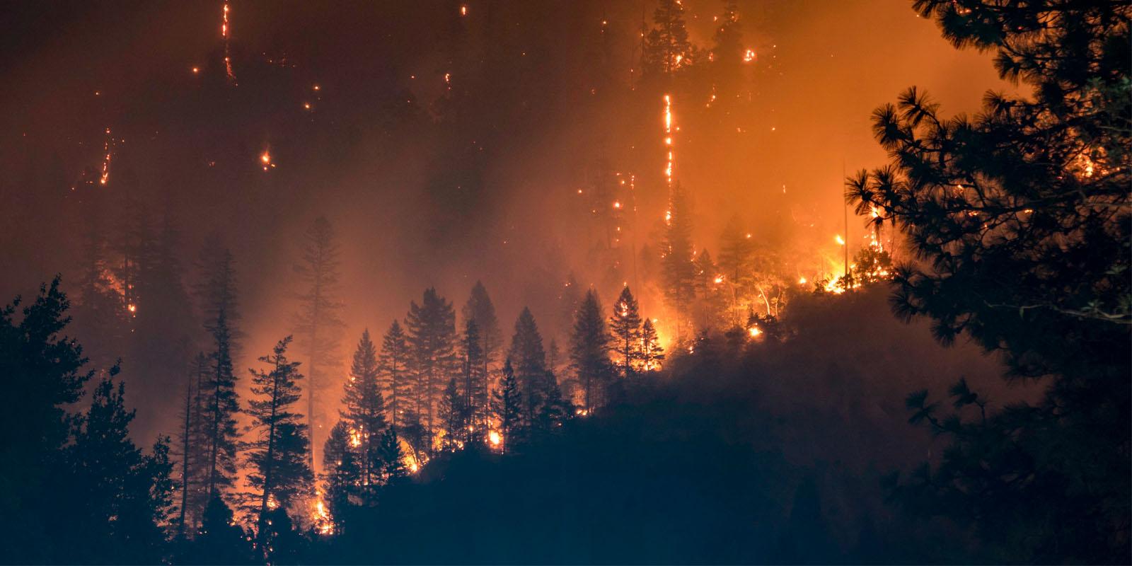 helpline for Forest Fires in himachal pradesh