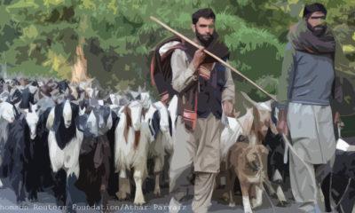 Western Himalayan Gujjar Tribe 2
